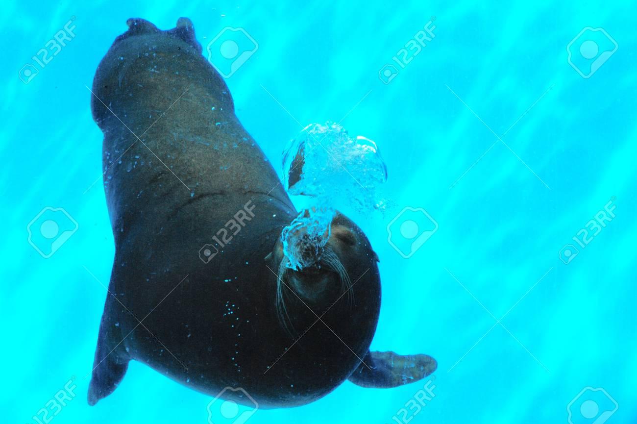 Sea Lion Bubbles Stock Photo - 15384339