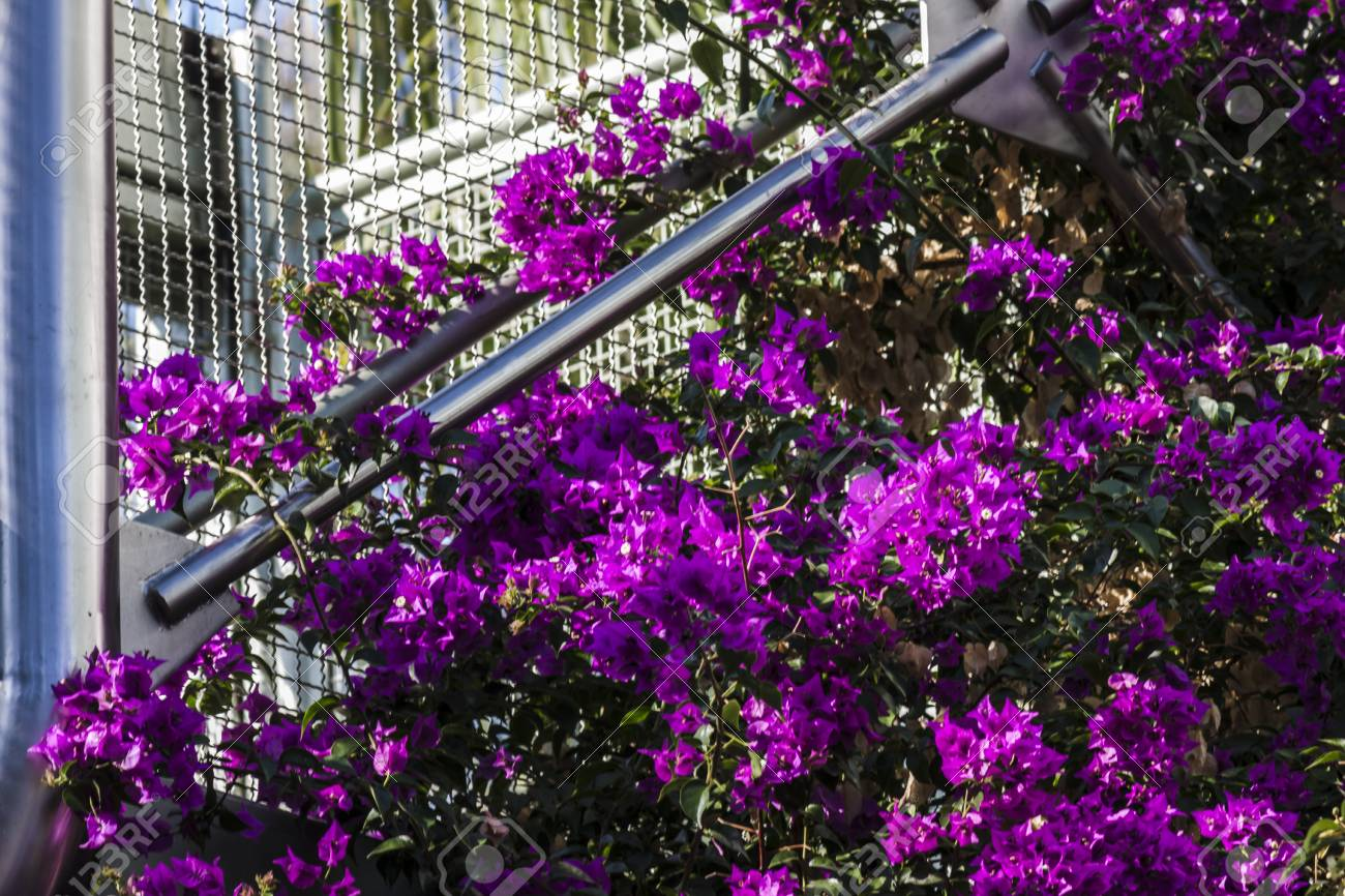 Purple climbing flowers and modern architecture stock photo picture purple climbing flowers and modern architecture stock photo 88635170 mightylinksfo