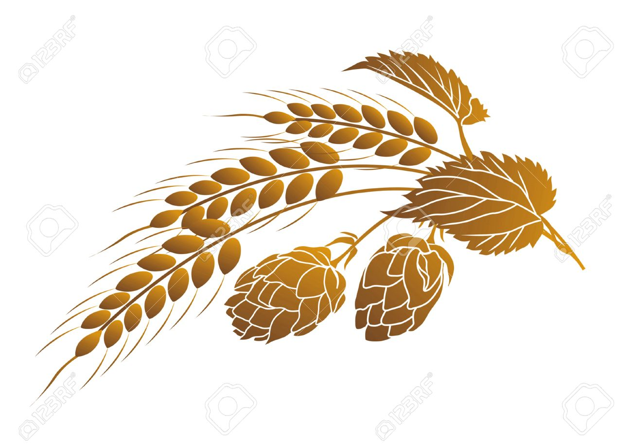 Iillustration of hops and ears of wheat Stock Vector - 4648153