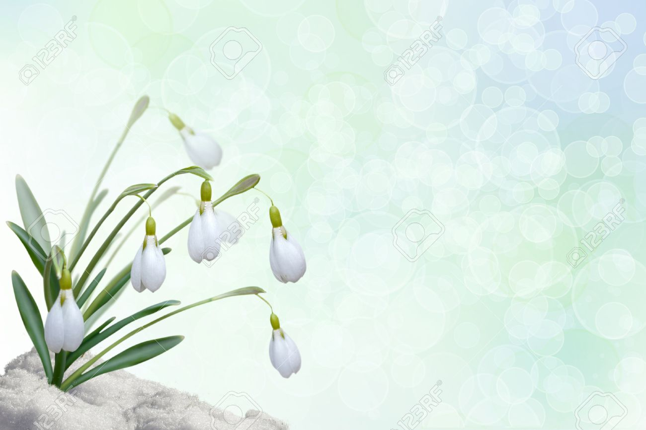 Background for a card with snowdrops Stock Photo - 17375543