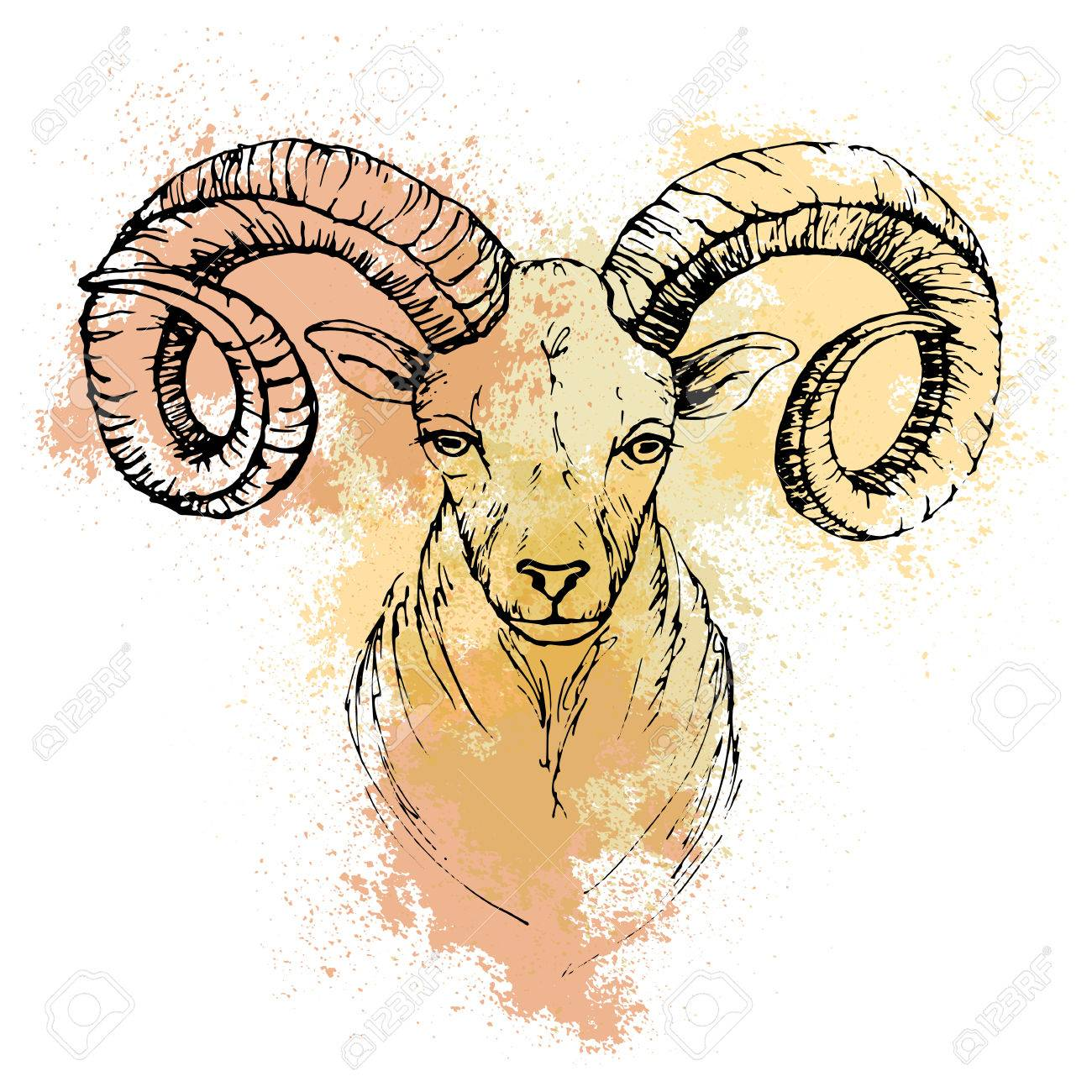 Sketch By Pen Of A Mountain Goat Head On Background Colored Watercolor Stains Stock
