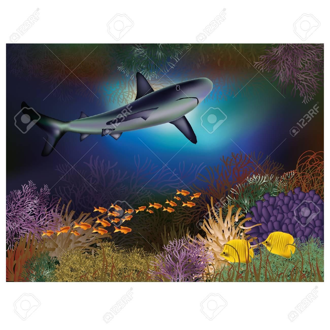 サメや魚の水中壁紙のイラスト素材 ベクタ Image 19935499