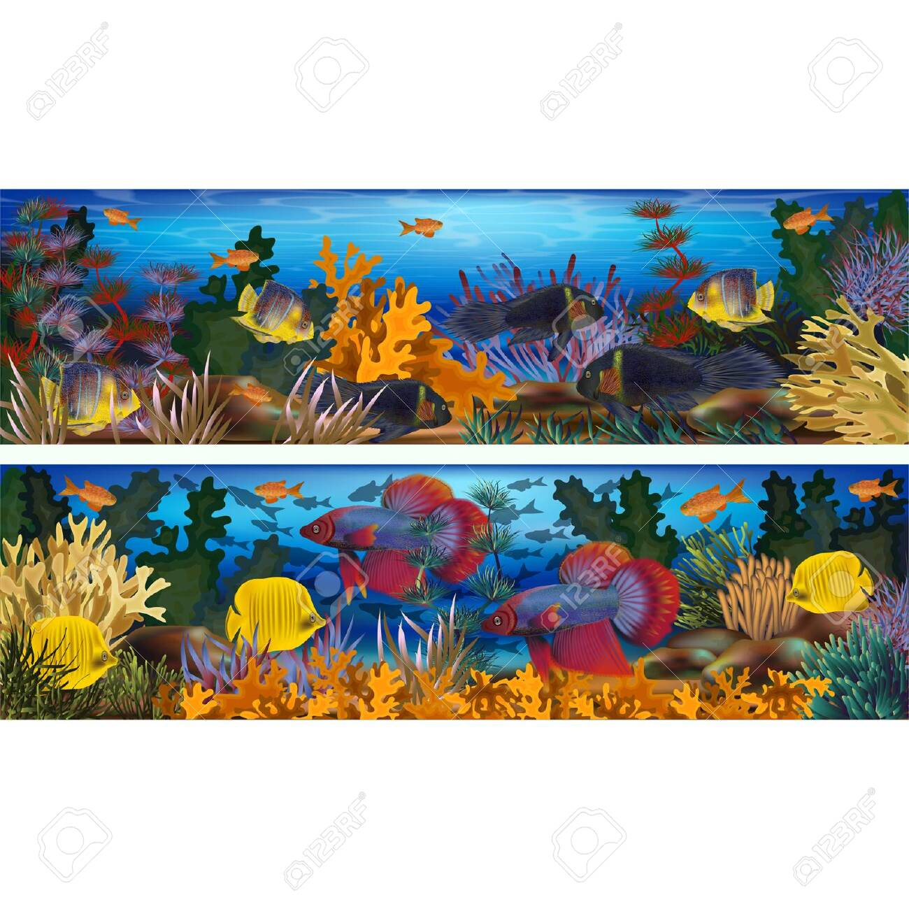 Underwater horizontal banners with algae and tropical fish, vector illustration - 122763316