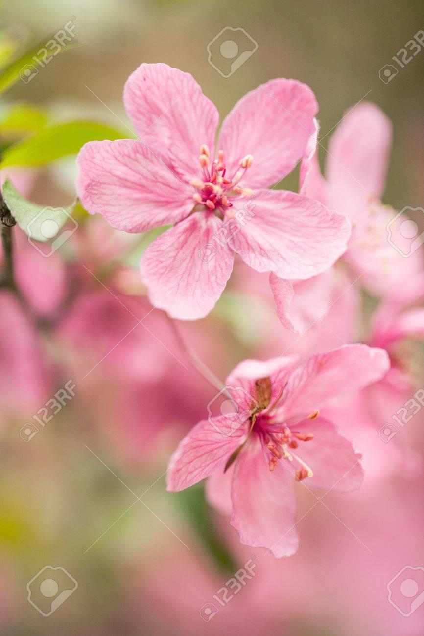 Beautiful dogwood tree flowers blooming in spring in illinois beautiful dogwood tree flowers blooming in spring in illinois stock photo 28262047 dhlflorist Choice Image