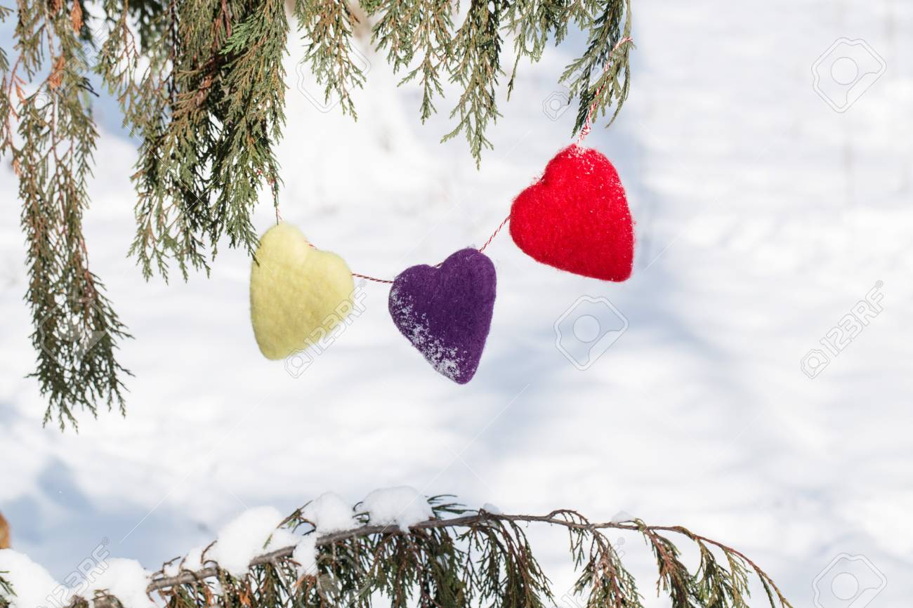 three valentines day love hearts hanging in pine tree in the.. stock