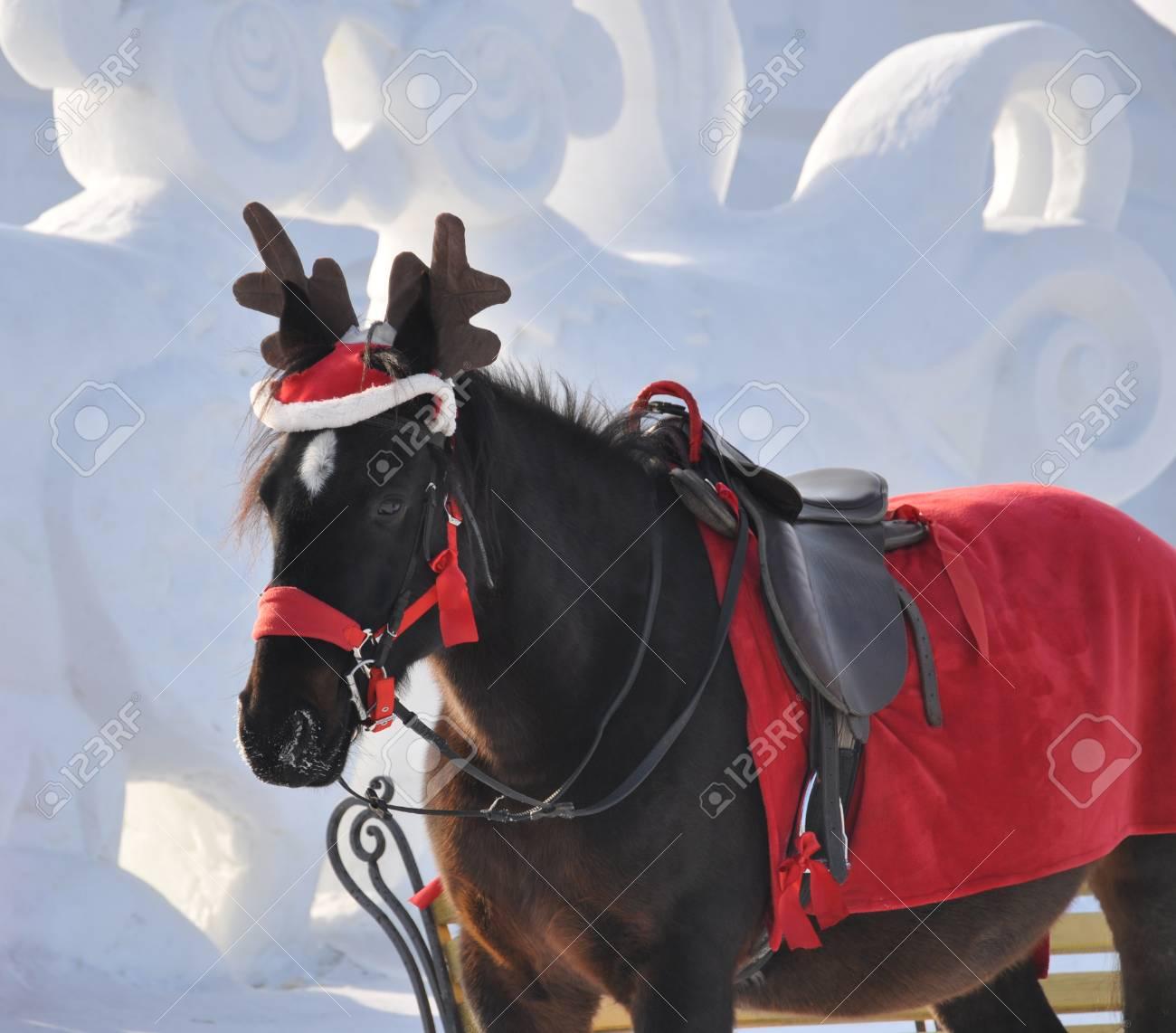 74539031-cheval-habill%C3%A9-en-pluie-de