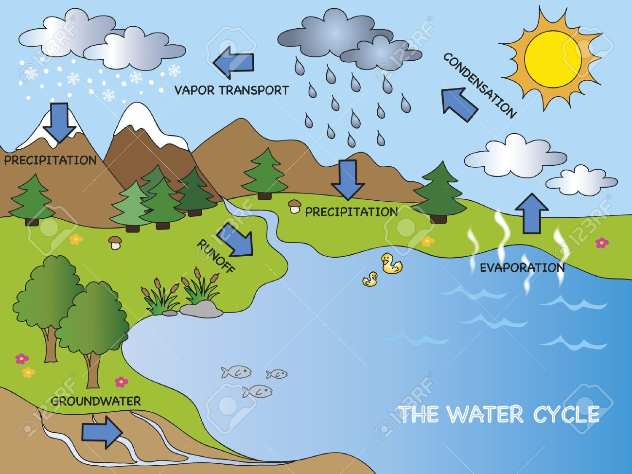 3880 water cycle stock vector illustration and royalty free water water cycle ccuart Gallery