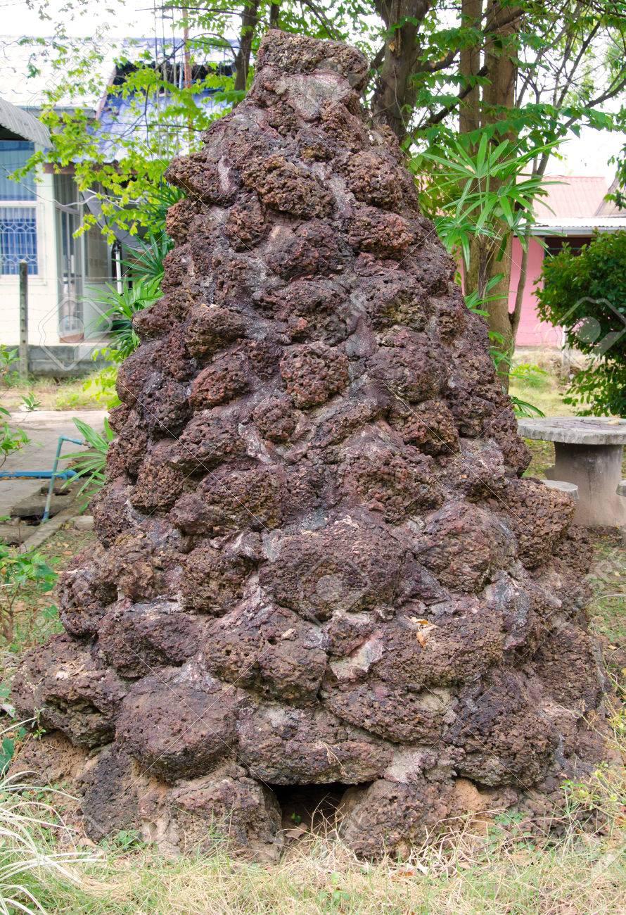 Anthill or Termite mound in garden