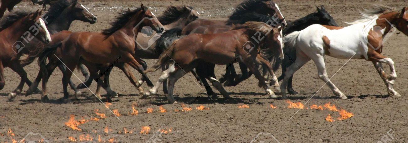 Running horses and fire circles,Calgary Stampede,AlbertaCanada - 2770929
