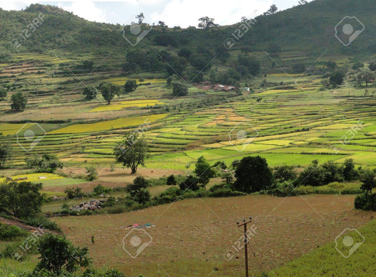 Rice Paddies In Valley Of The Eastern Ghats, Orissa, India, Asia ...