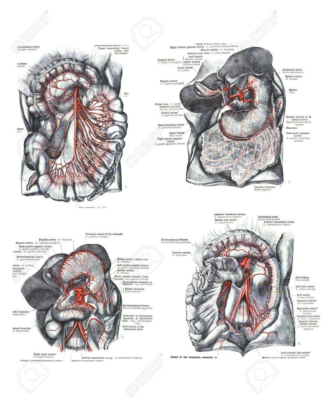 4 Ansichten Der Menschlichen Hand Und Fuß Von Der Anatomie Des ...