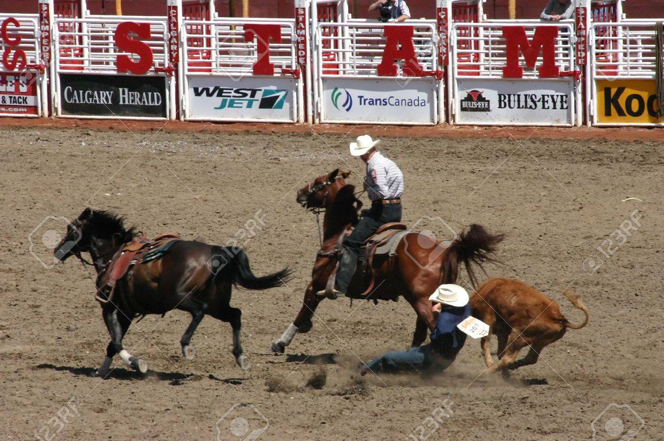 CALGARY CANADA JULY 2004 - Cowboy wrestling steer to the ground,
