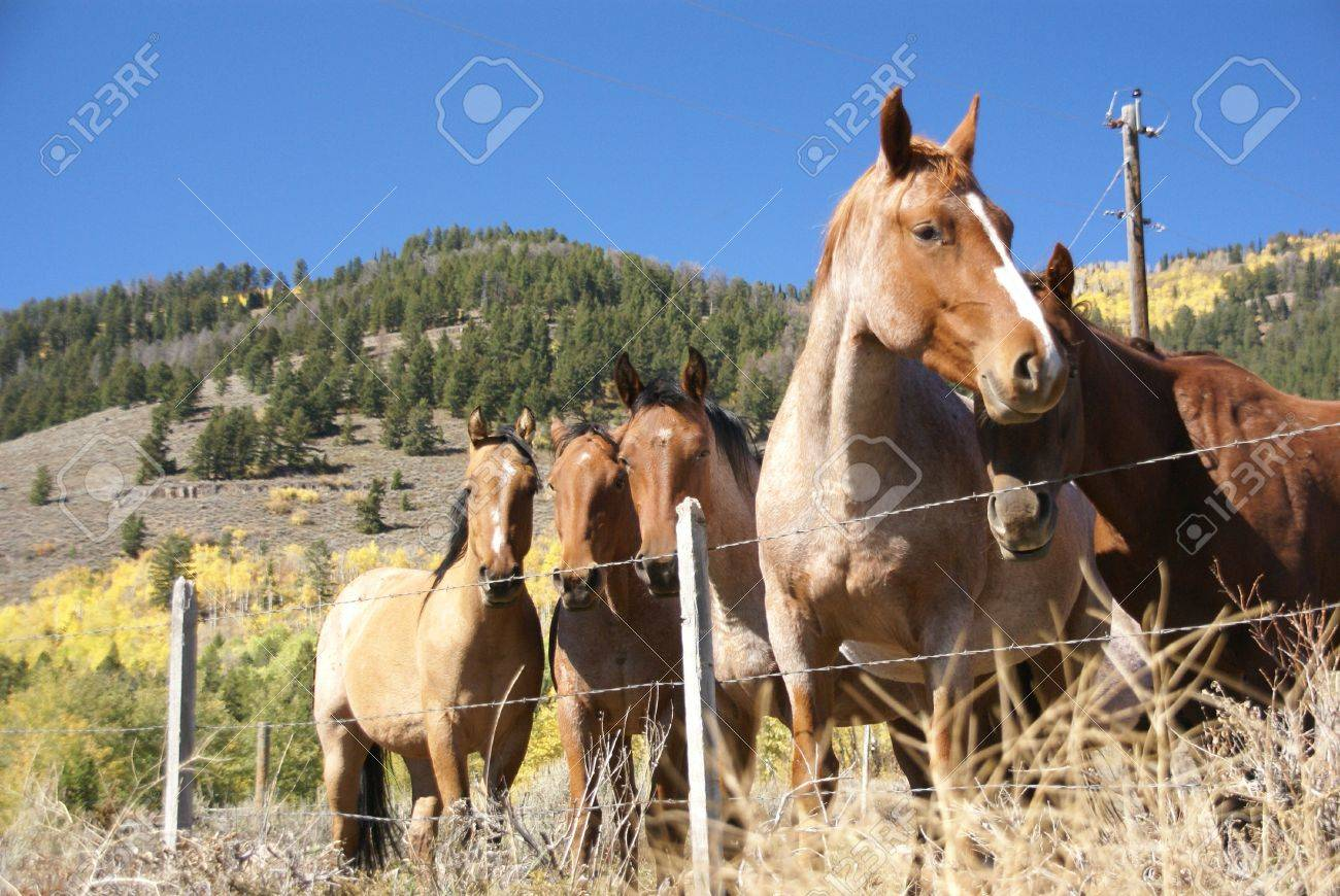Barbed Wire Fence For Horses Center Amperes Power Supply Circuit Design Using Isl8036 Switching And Tieton Pass Wyoming Stock Photo Rh 123rf Com How To Build