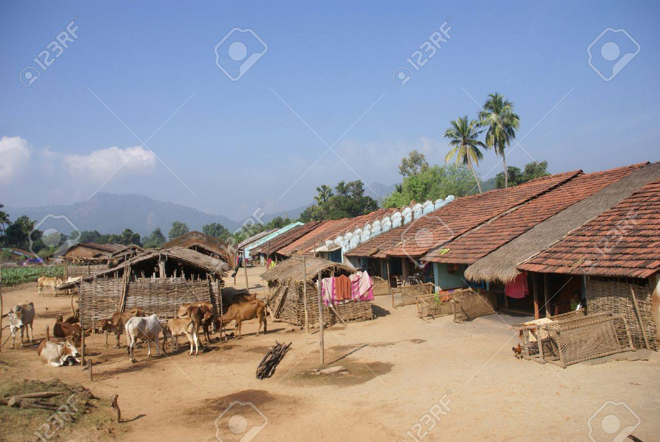 Homes And Cattle Of A Tribal Village In Orissa, India Stock Photo ...