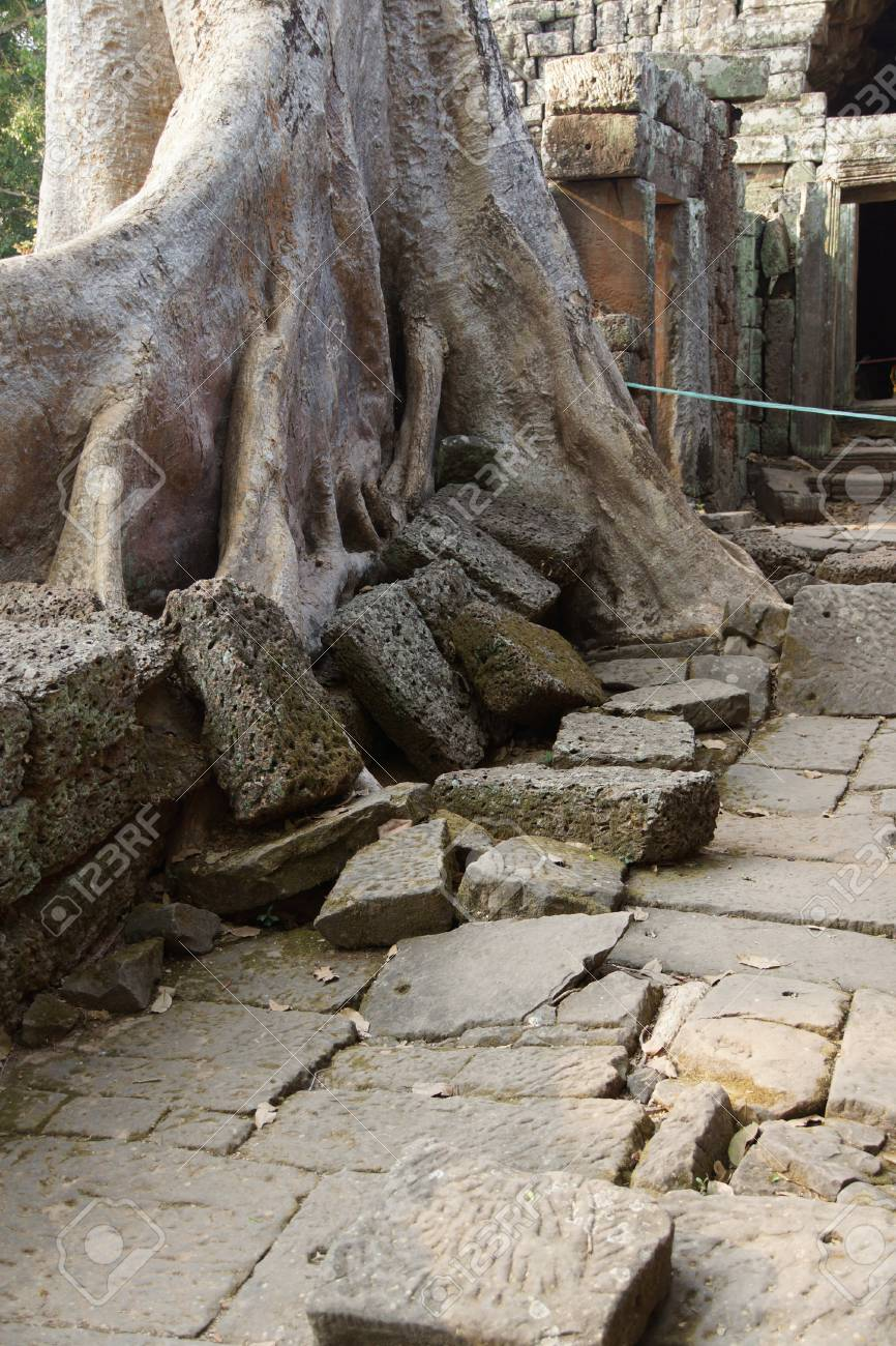 Terraza De Piedra Envuelta Por Enormes Raíces De Los árboles Ta Prohm Camboya