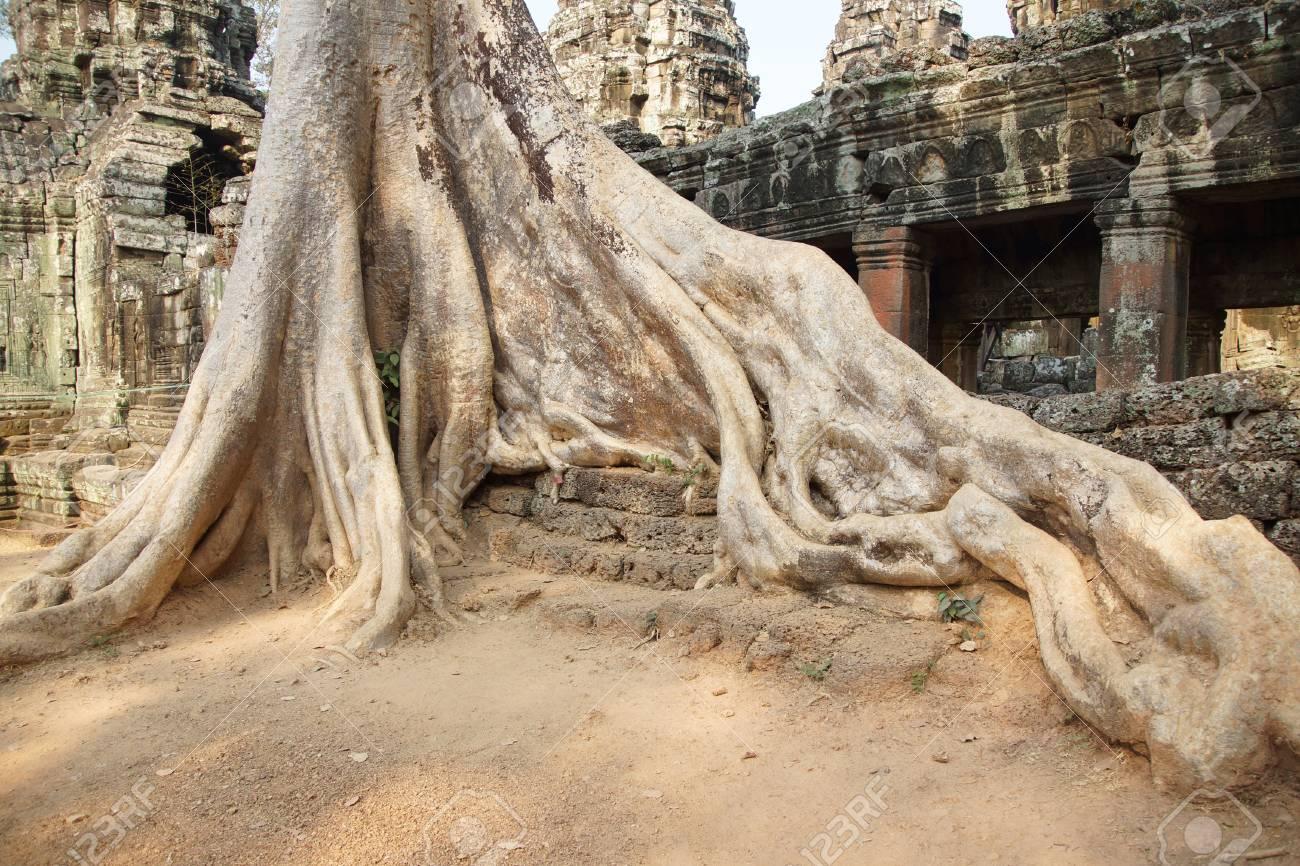 Terraza De Piedra Rodeada De Enormes Raíces De árboles Ta Prohm Camboya