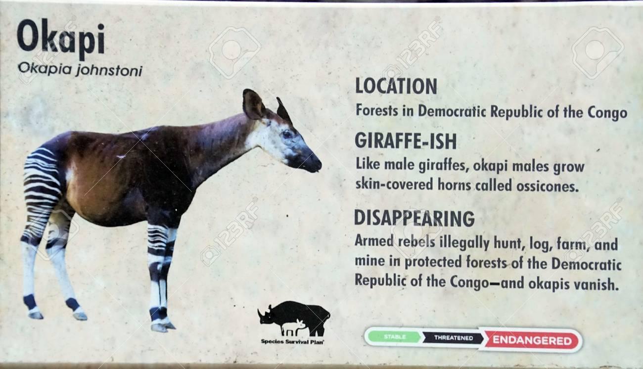 Okapi Okapia Johnstoni Similar To A Giraffe San Diego Stock