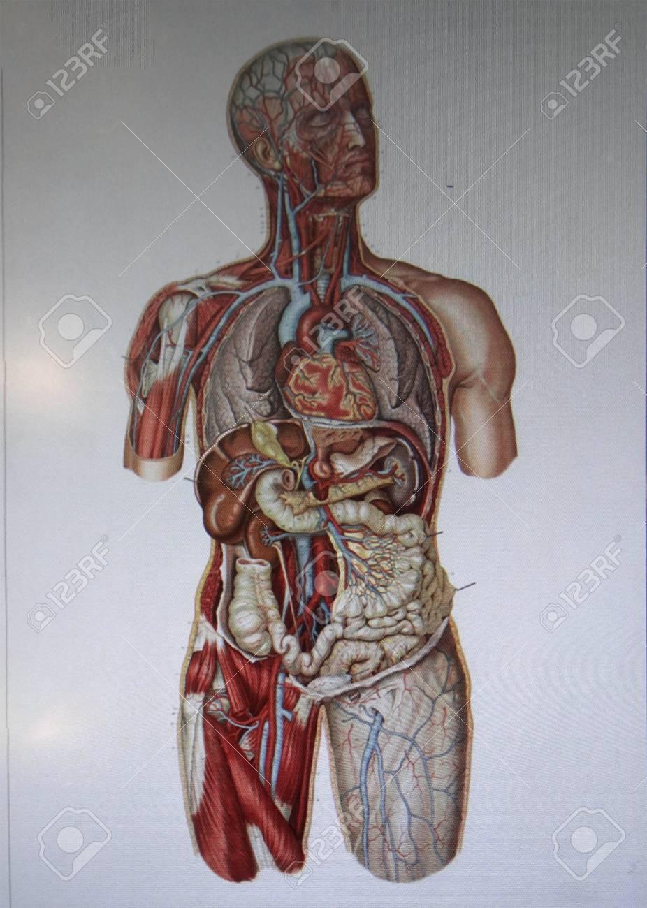 Geneva Switzerland Feb 24 2018 Human Anatomy Display At