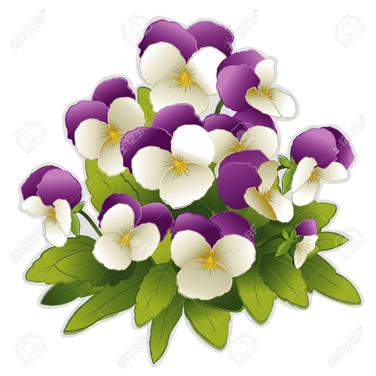 Johnny Jump Up Pansy flowers (Viola tricolor) Stock Vector - 12392278