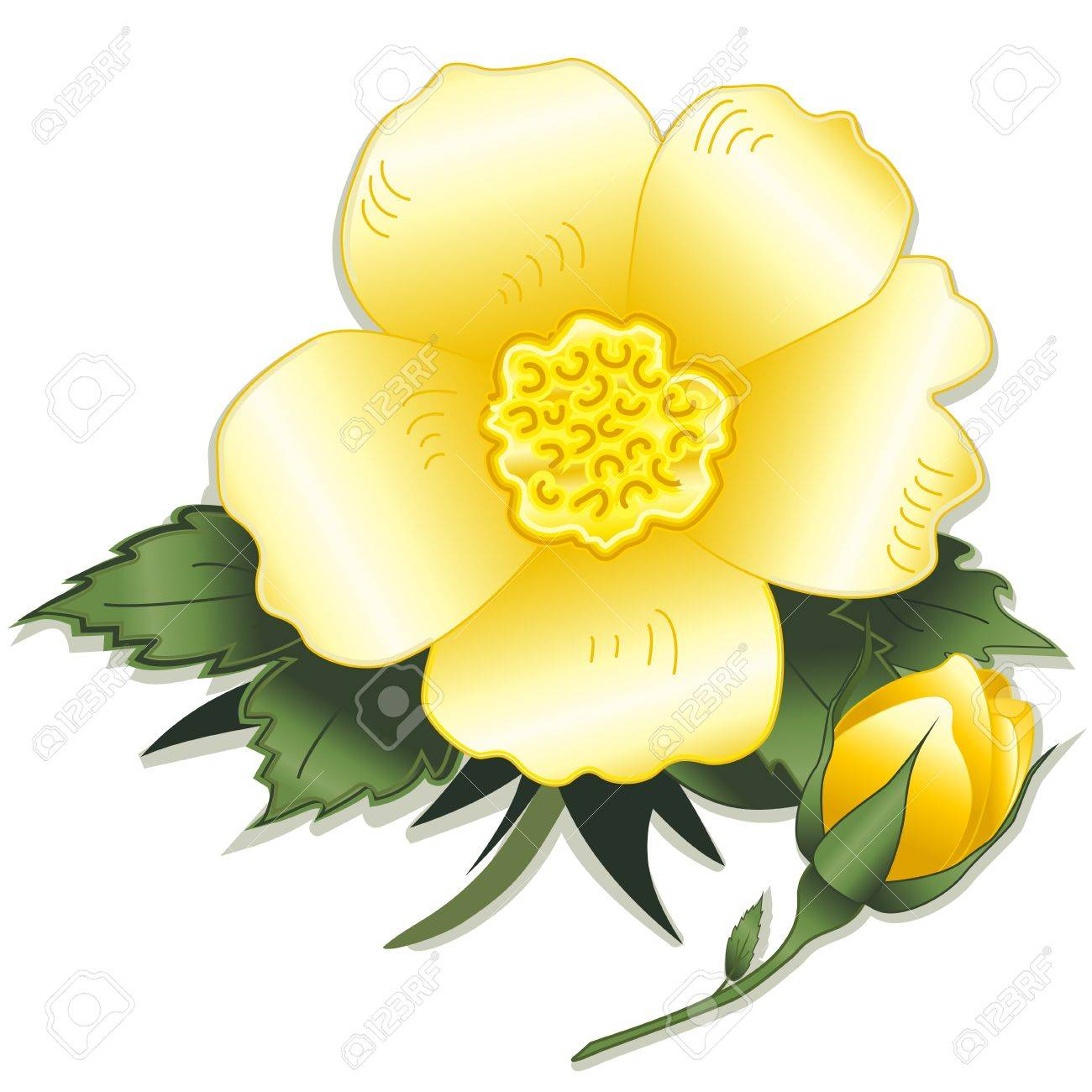 Wild prairie yellow rose flower royalty free cliparts vectors wild prairie yellow rose flower stock vector 12392298 dhlflorist Image collections