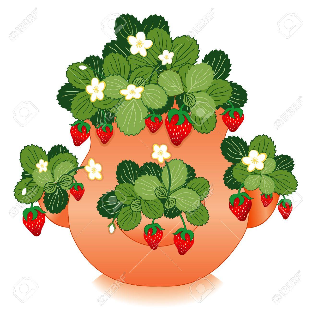 in clay strawberry jar planter stock vector