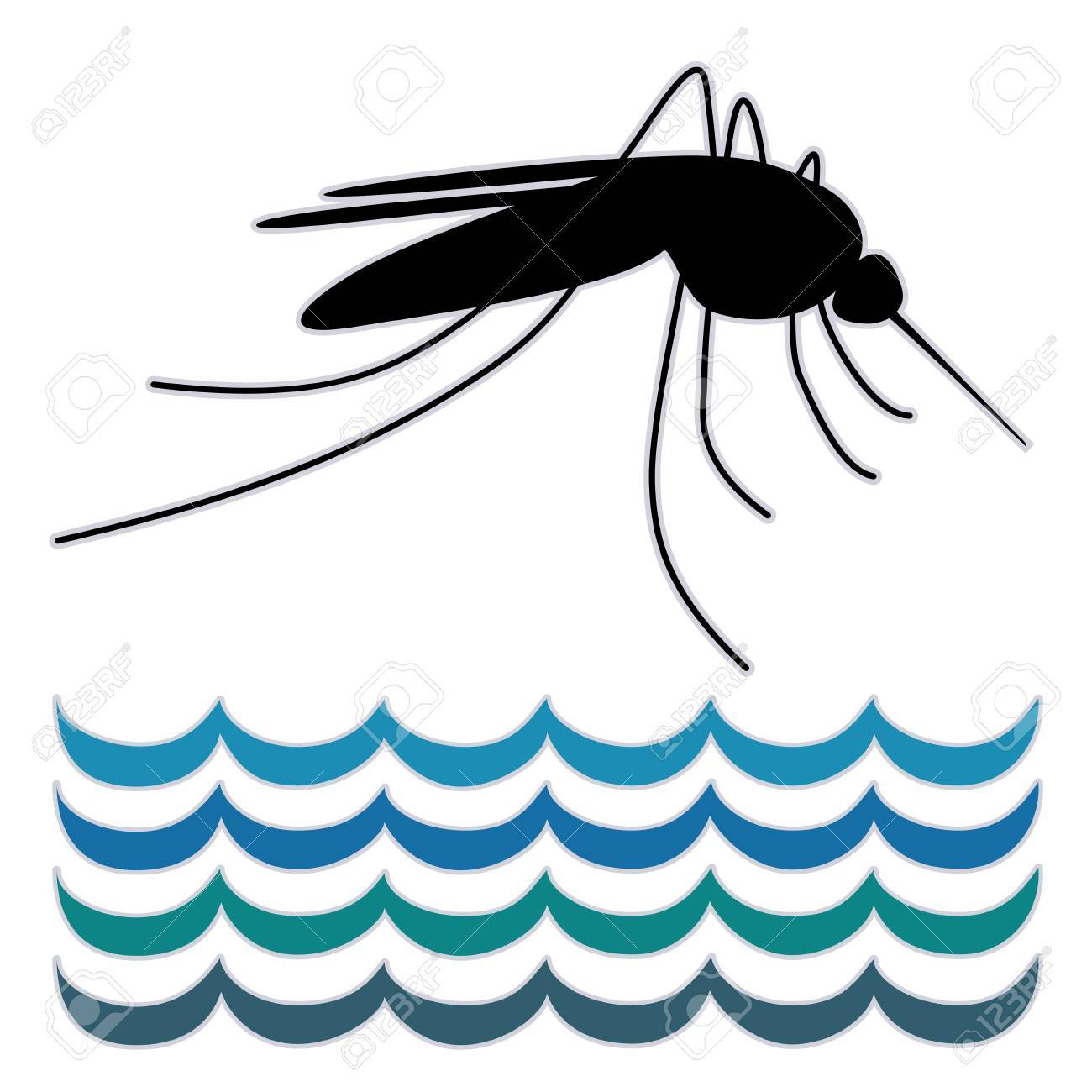 Mosquito, standing water, graphic illustration, isolated on white background Stock Vector - 16608090