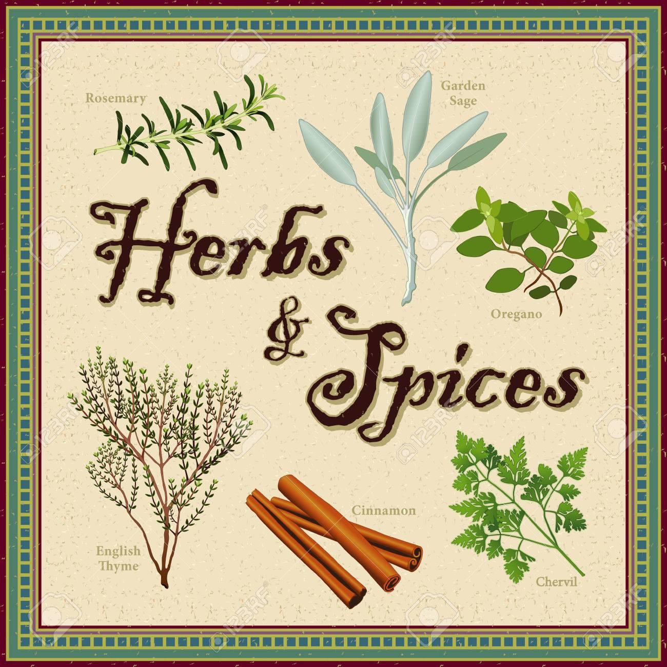 Hierbas Y Especias; Romero, Jardín Sage, Francés Perifollo, Canela ...