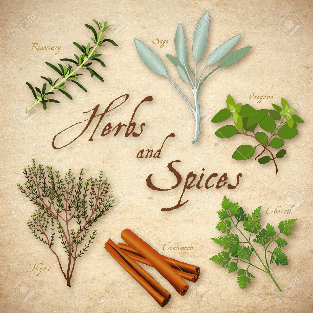 Herbs And Spices Rosemary Garden Sage French Chervil Stick
