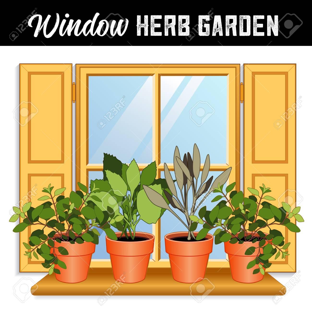 225 & Window Herb Garden with Italian Oregano Garden Sage Sweet Basil..