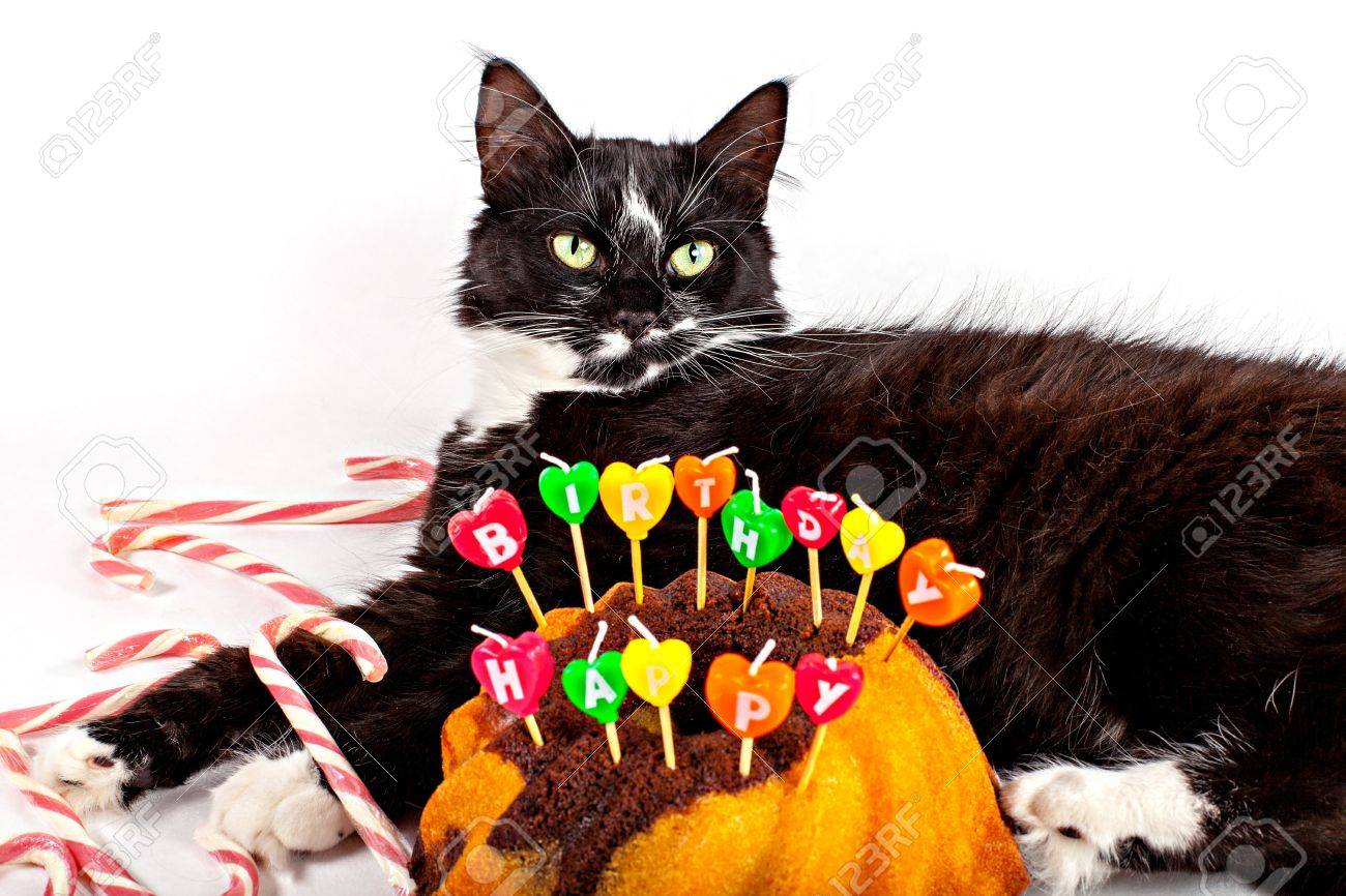 Cat With Birthday Cake Kitty Cat BirthdayCat Birthday - This cat eating a birthday cake is everything you need in life