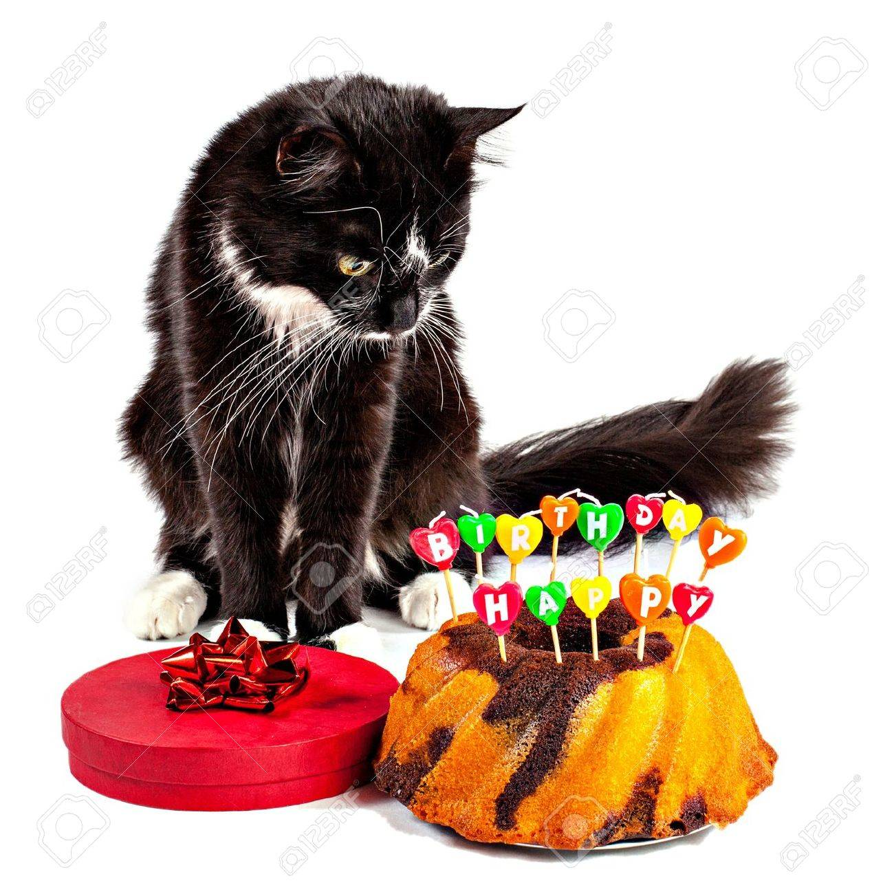 Cat With Birthday Cake And Gift Isolated On White Stock Photo