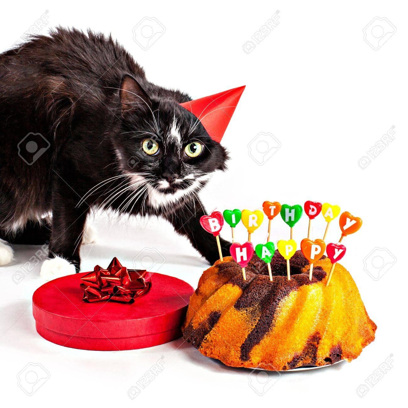 Chat Avec Le Chapeau Danniversaire Gâteau Et Un Cadeau Isolé Sur