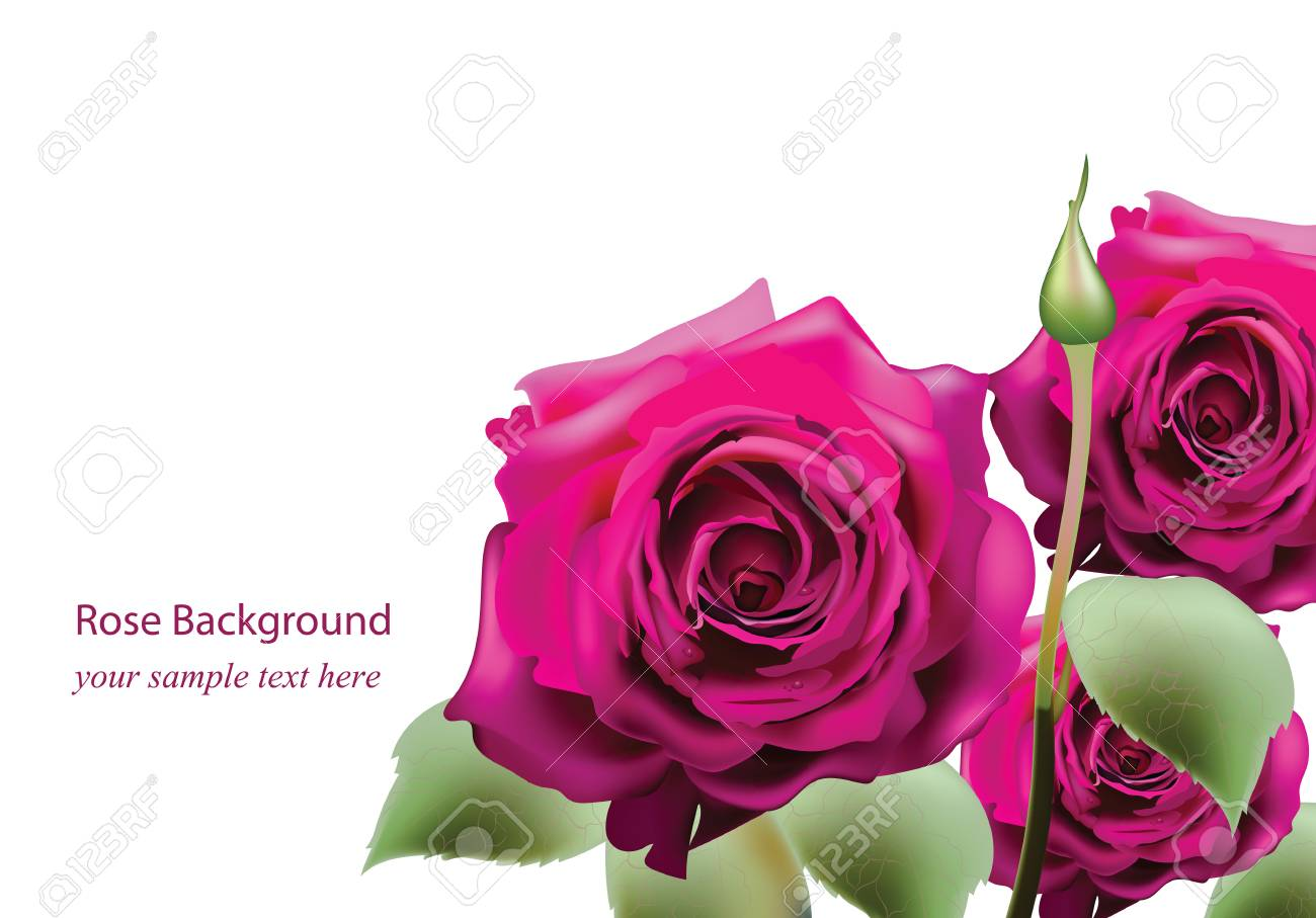 Realistic Pink Roses Bouquet Beautiful Flowers Roses Postcard