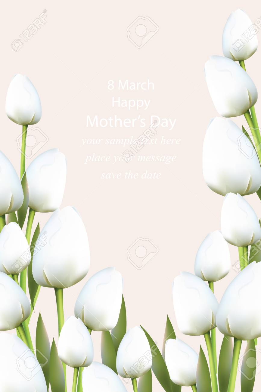 White Tulips Flowers Blossom Vector Illustration Beautiful Spring