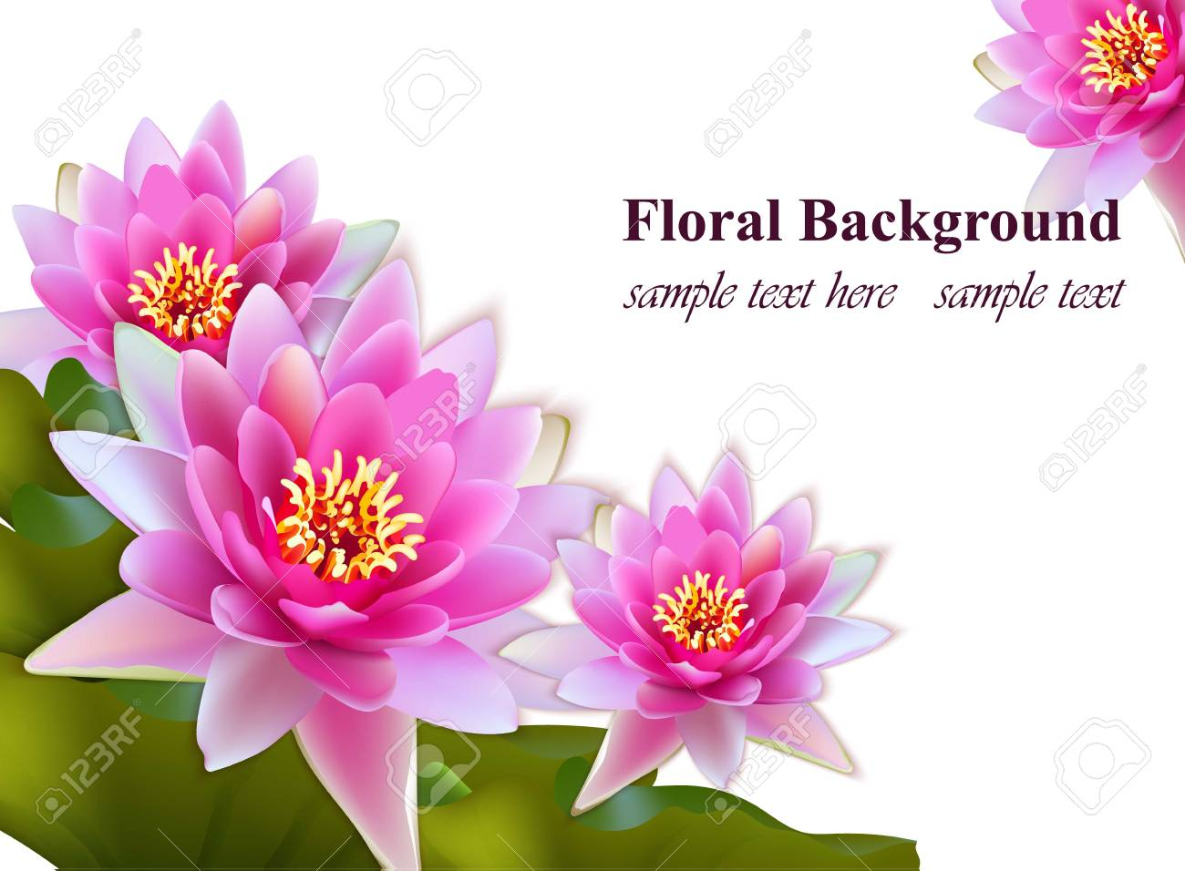Pink Water Lily Flowers Realistic On White Background Vector