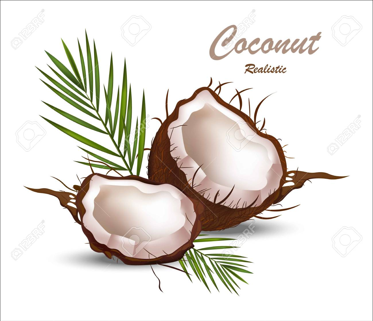 Whole Coconut Clipart 55029