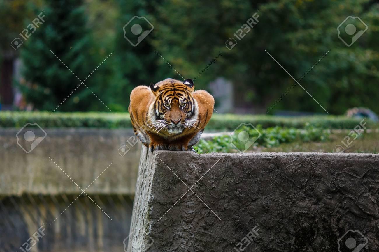ワルシャワ動物園の端に異常な姿...
