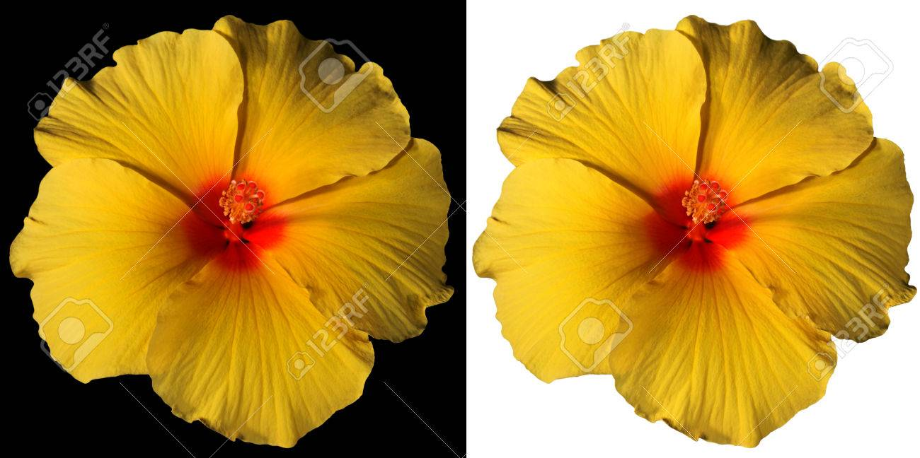 Macro Photography Of A Orange Yellow And Red Hibiscus Flower