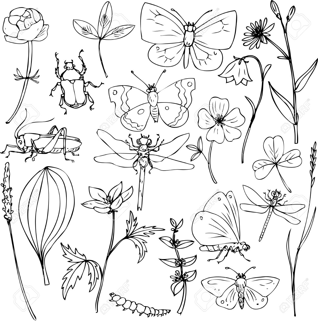big set of ink drawing meadow objects plants flowers grass