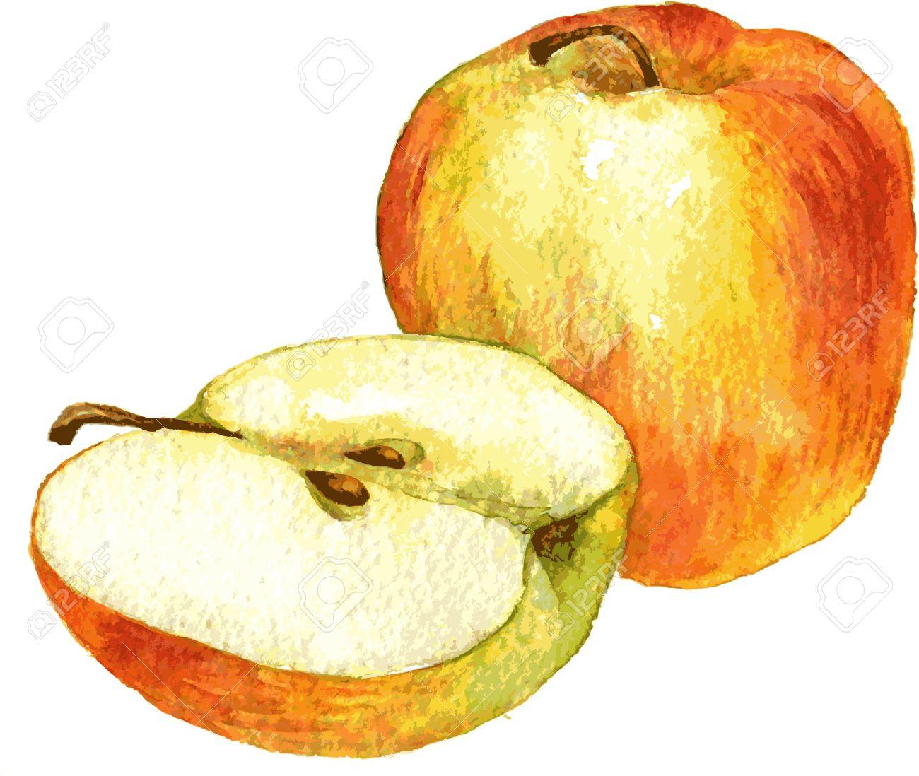 Dessin Pomme pomme entière et la moitié dessin de pomme par aquarelle, tiré par