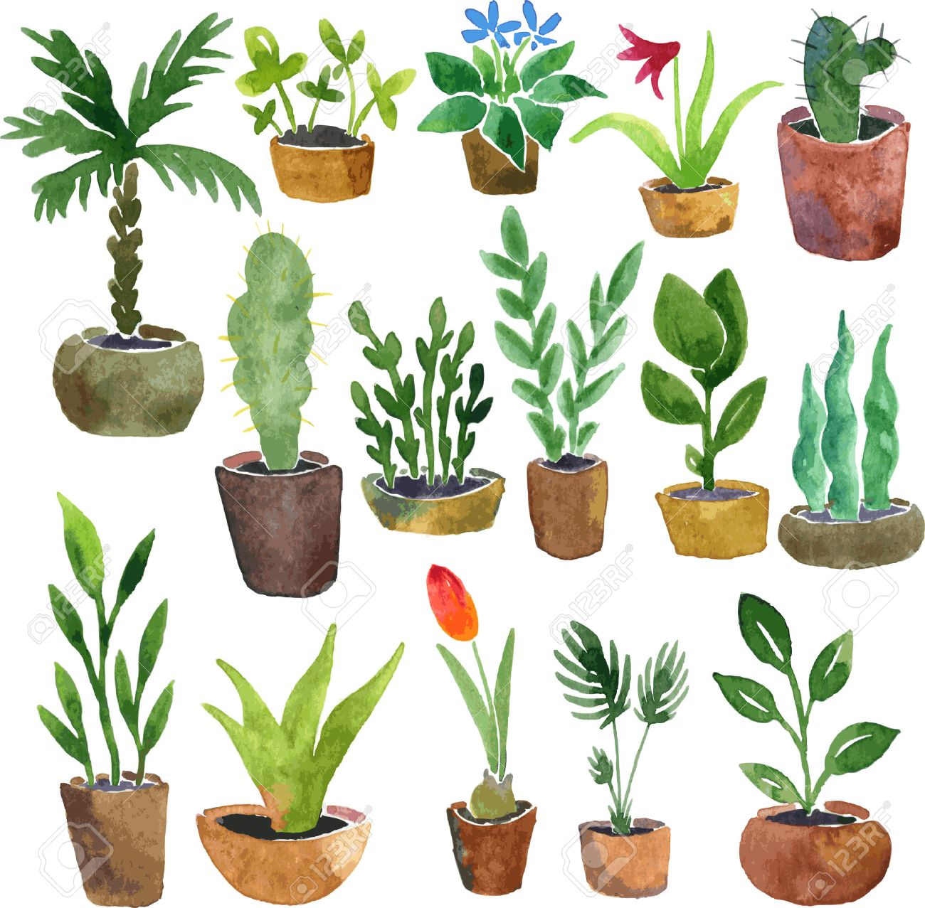 Connu Watercolor Drawing Home Plants, Hand Drawn Vector Illustration  PA88