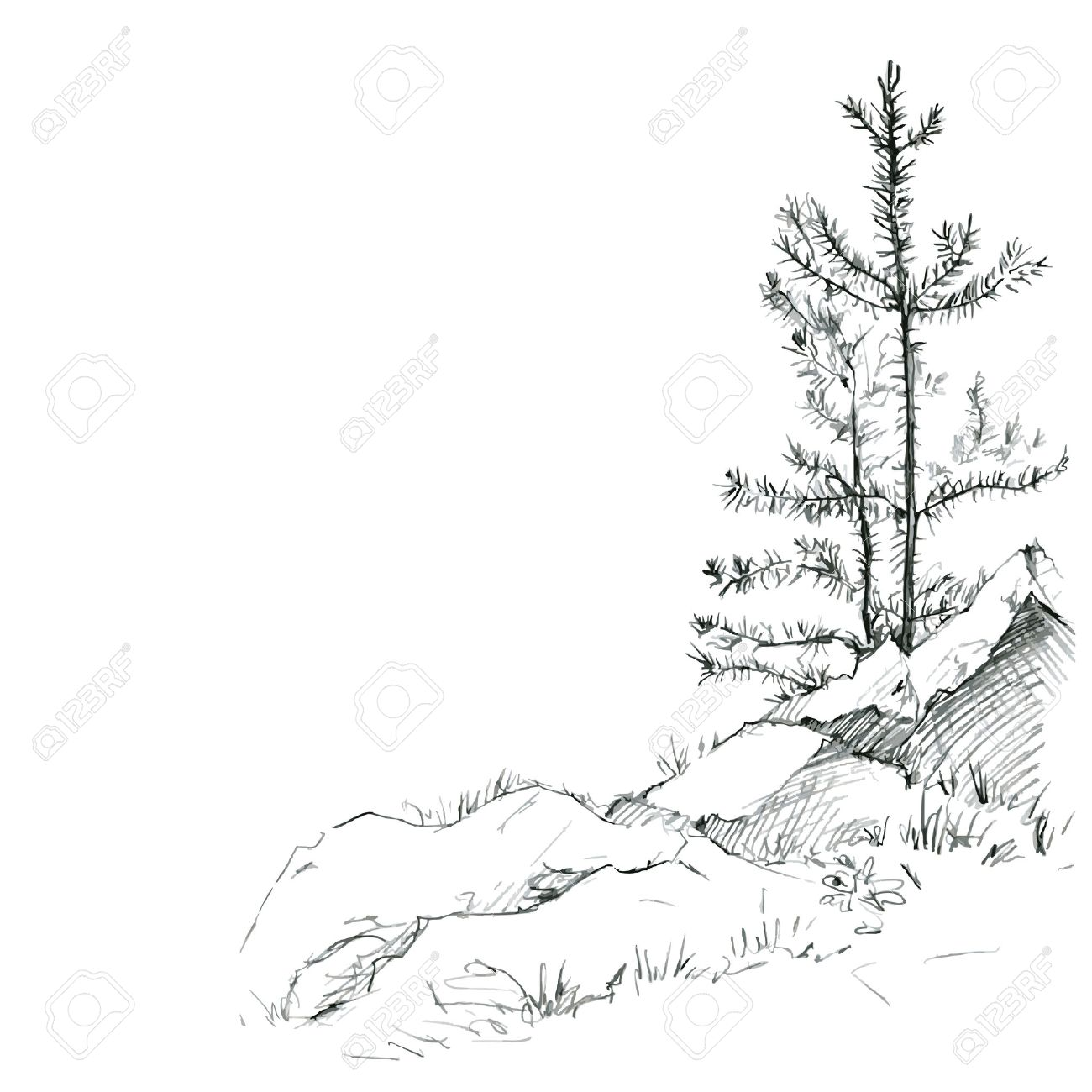 Vector young pine trees and rocks drawing by pencil sketch of wild nature forest sketch hand drawn vector illustration