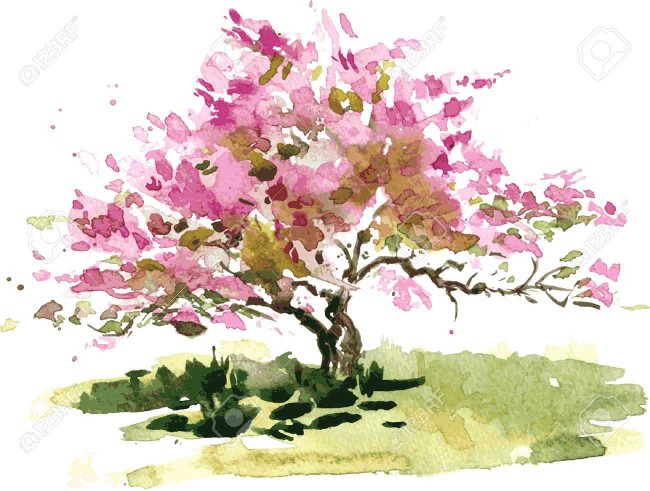 Cherry Blossom Tree Drawing By Watercolor, Aquarelle Sketch Of ... for Tree Drawing With Watercolor  585eri