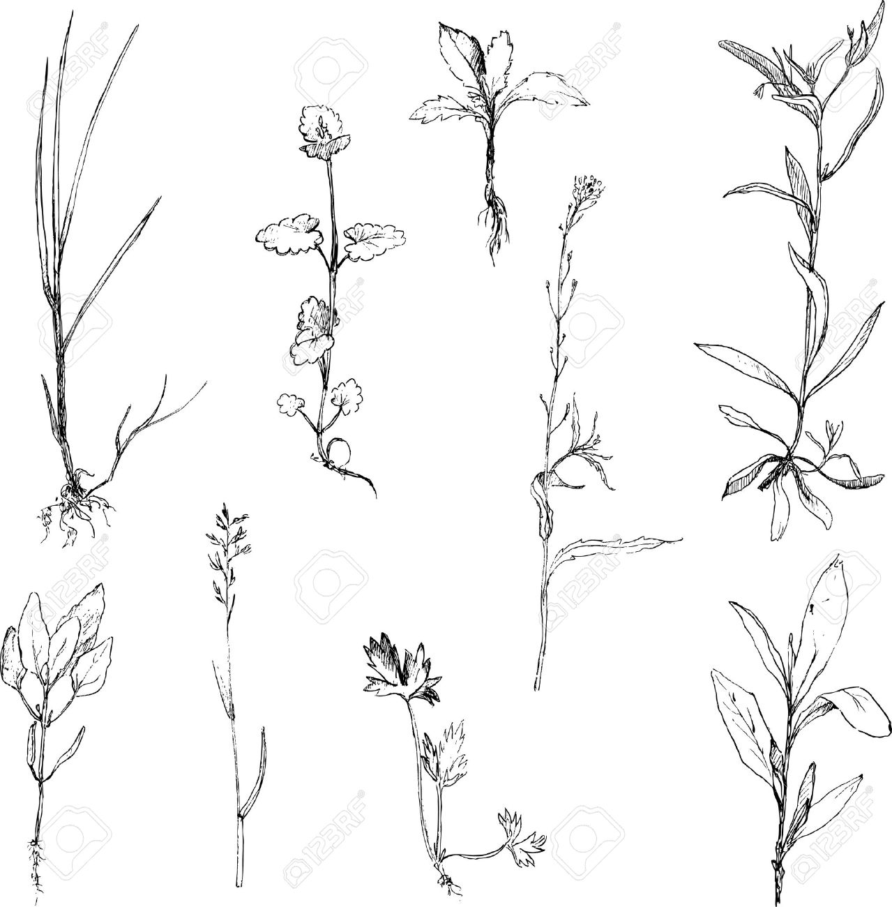 Set of pencil drawing herbs and leaves painted graphite pencil