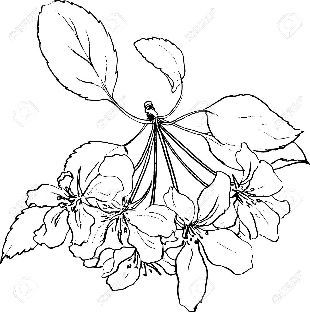 Fleurs De Printemps De Pommier Dessin Au Trait Pomme Fleurs Avec