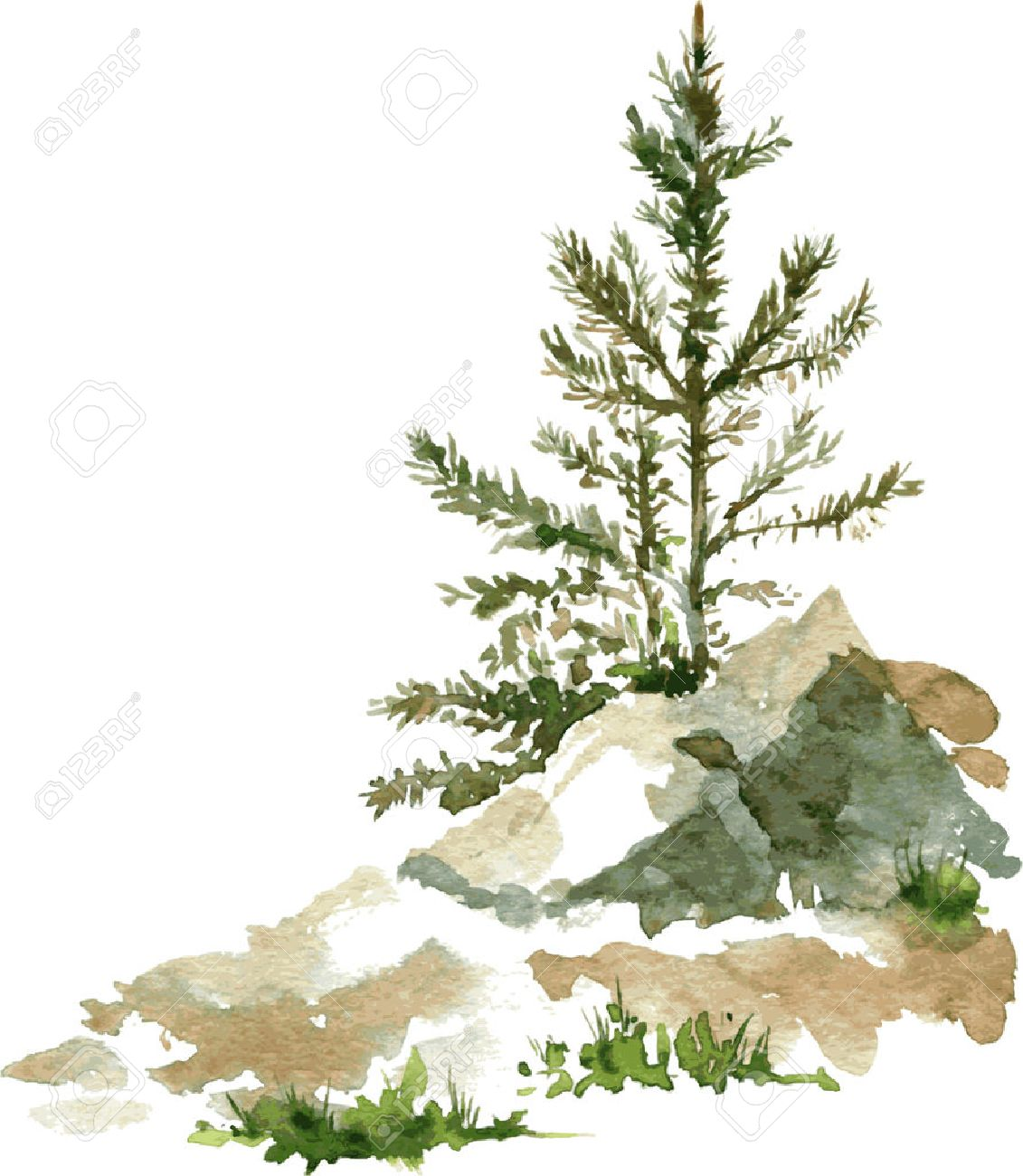 Young Pine Trees And Rocks Drawing By Watercolor, Aquarelle Sketch ... for Tree Drawing With Watercolor  56bof