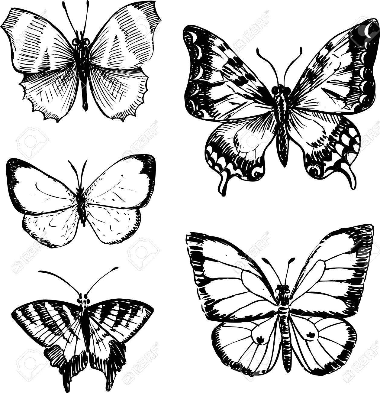 set of butterflies ink drawing vector illustration royalty free