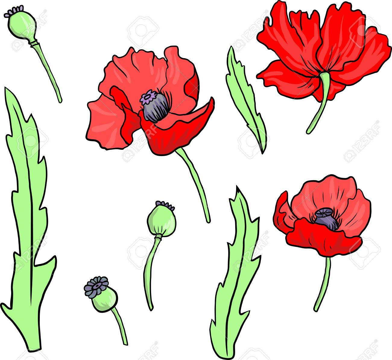 Set Of Linear Drawing Poppy Flowers Hand Drawn Vector Illustration
