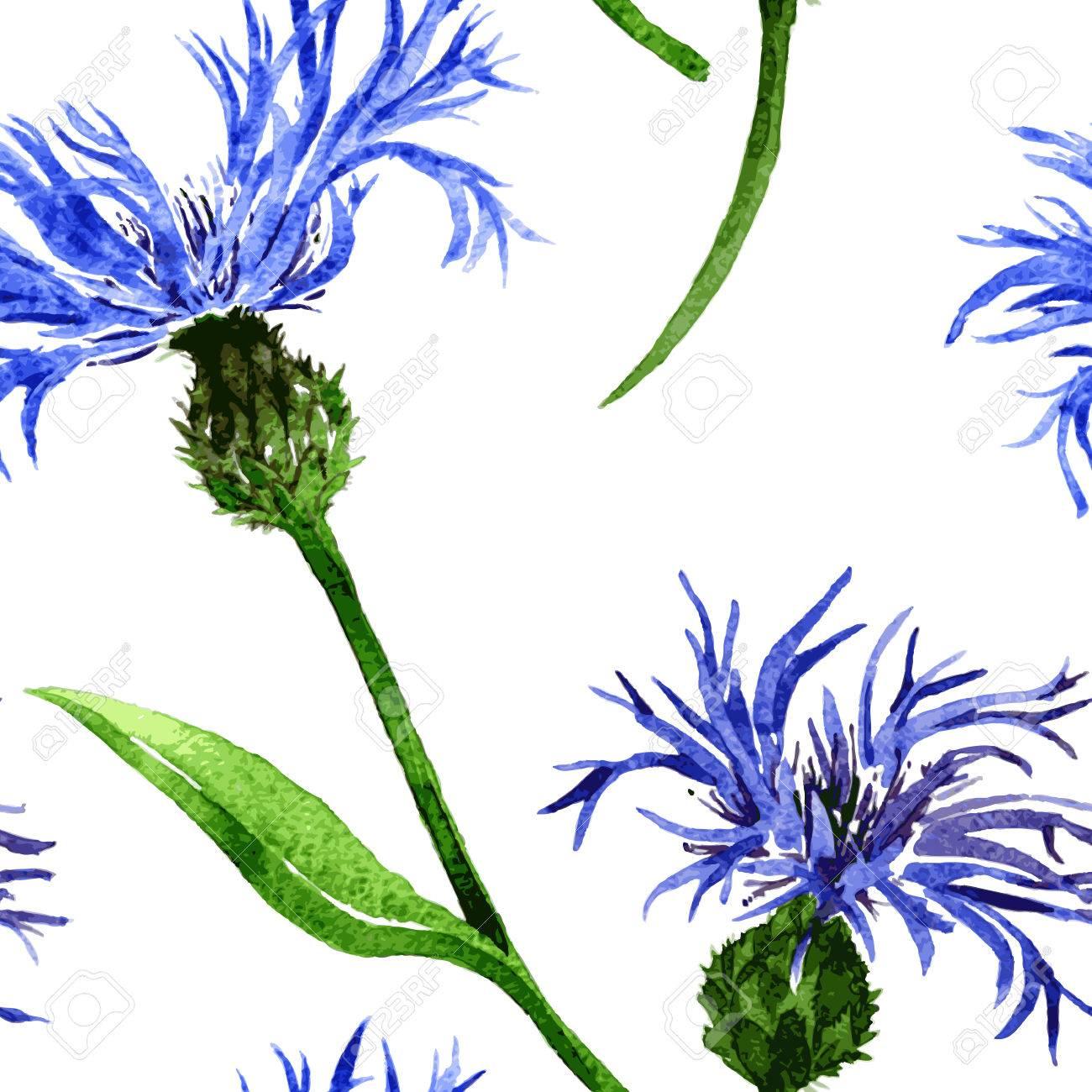 Vector Sin Patron Con Acuarela Flores Azules De Acianos Dibujado A