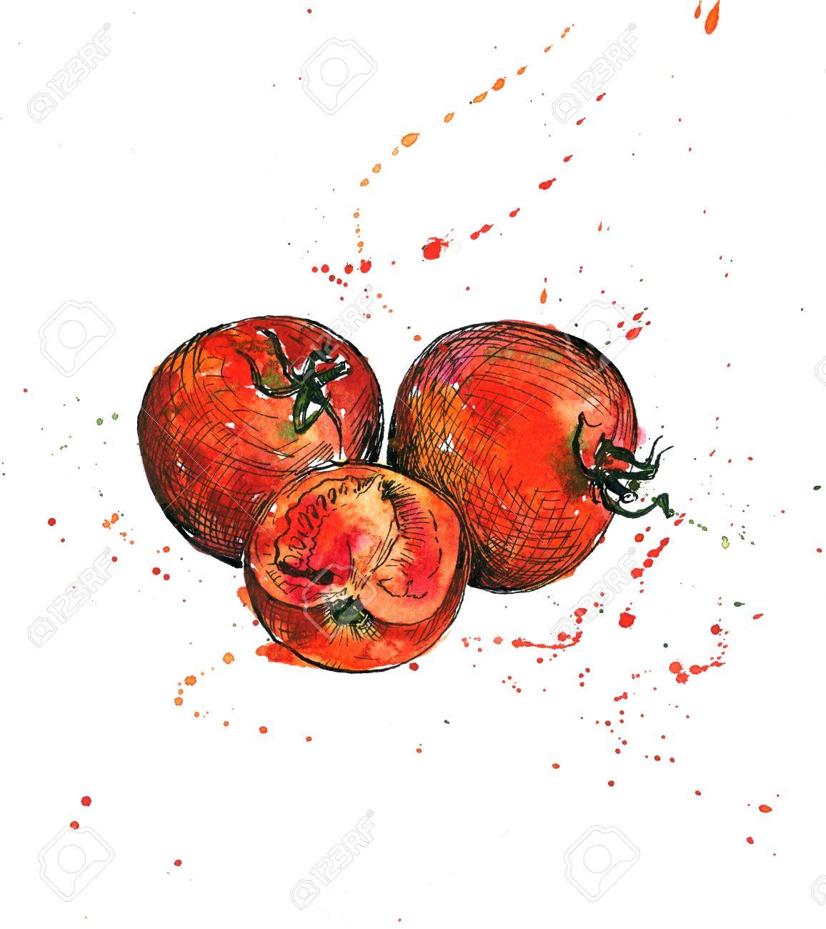 tomates dibujo de la tinta y de la acuarela con manchas de
